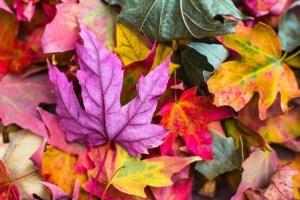 Im Herbst mit Meditation die Natur genießen.
